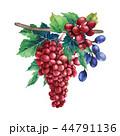 ぶどう ブドウ 葡萄のイラスト 44791136