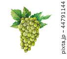 ぶどう ブドウ 葡萄のイラスト 44791144
