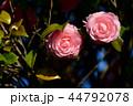 植物 花 椿の写真 44792078