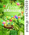 ベジタブル 野菜 きゃべつのイラスト 44792659