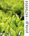 茶畑 新緑 畑の写真 44794954
