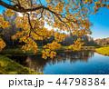 木 木々 樹々の写真 44798384