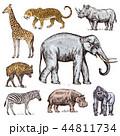 ぞう ゾウ 象のイラスト 44811734