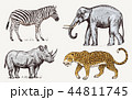 Set of African animals. Rhinoceros Elephant Leopard. Engraved hand drawn Vintage old monochrome 44811745