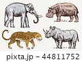 Set of African animals. Rhinoceros Elephant Hippopotamus Leopard. Engraved hand drawn Vintage old 44811752