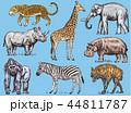 動物 ぞう ゾウのイラスト 44811787