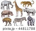 ぞう ゾウ 象のイラスト 44811788