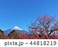 富士山 春 花の写真 44818219