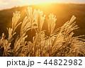 すすき 植物 穂の写真 44822982