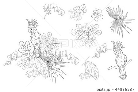 Set of elements for design with tropical plants 44836537