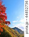 青空 秋 秋晴れの写真 44852736