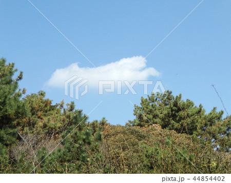 稲毛海岸の青空と白い雲 44854402