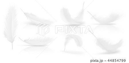 realistic 3d set of white bird feathers 44854799