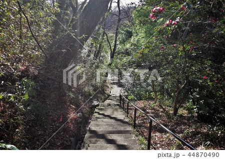 Dazzling sunshine and tree forest, forest and park 44870490