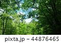 森 自然 風景の写真 44876465