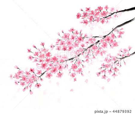 桜 水墨画 彩墨画 44879392