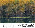 御射鹿池 紅葉 秋の写真 44883060