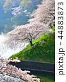 桜 春 染井吉野の写真 44883873