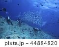 スキューバダイビング ダイバー ダイビングの写真 44884820
