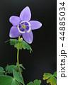 クローズアップ 花 植物の写真 44885034