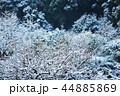 雪 枝 冬の写真 44885869