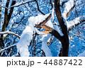 冬 雪 木の写真 44887422