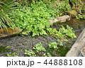 静岡県三島市の清流 44888108