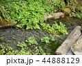 静岡県三島市の清流 44888129