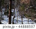 埼玉県秩父市の積雪した山林 44888507