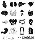 内部 臓器 黒色のイラスト 44896689