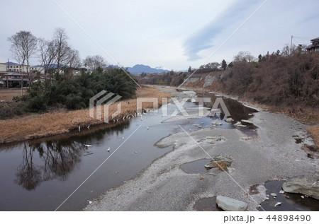 田舎の河川に集まる白鷺、白鳥 44898490