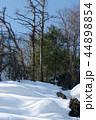 自然 冬 雪の写真 44898854