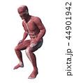 人体 筋肉 解剖のイラスト 44901942