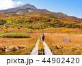 鳥海山 竜ヶ原湿原 44902420