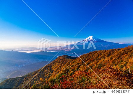 (山梨県)紅葉した三ツ峠山から望む、冠雪した富士山 44905877