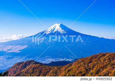(山梨県)紅葉した三ツ峠山から望む、冠雪した富士山 44905902
