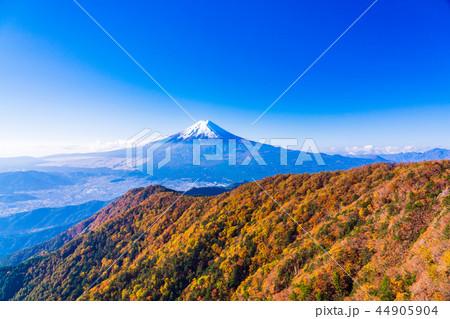 (山梨県)紅葉した三ツ峠山から望む、冠雪した富士山 44905904