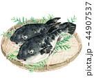河豚 魚 笊のイラスト 44907537