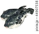 河豚 魚 魚類のイラスト 44907538