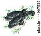 河豚 魚 海水魚のイラスト 44907539