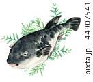 河豚 魚 海水魚のイラスト 44907541