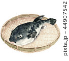 河豚 魚 魚類のイラスト 44907542