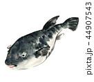 河豚 魚 魚類のイラスト 44907543