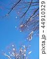 木 雪 青空の写真 44910329