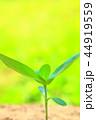 芽 新芽 葉の写真 44919559