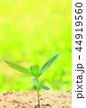 芽 新芽 葉の写真 44919560