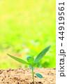 芽 新芽 葉の写真 44919561