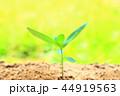 芽 新芽 葉の写真 44919563