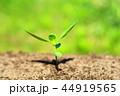 芽 新芽 葉の写真 44919565