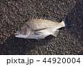 魚 釣り 魚介類の写真 44920004